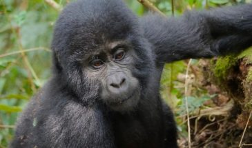 8 Days Rwanda Wildlife and Primate Safari 3