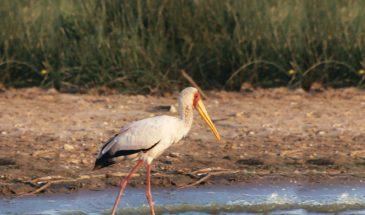 14 Day Uganda Birding Tour 3