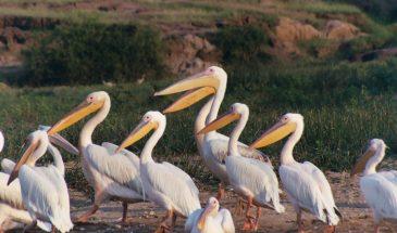 21 Days Birding Tour - Birders Paradise 16