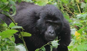 6 Days Gorilla Adventure 4