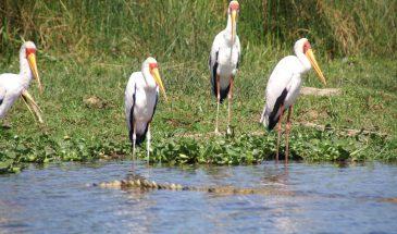 7 Day Birding Tour 2